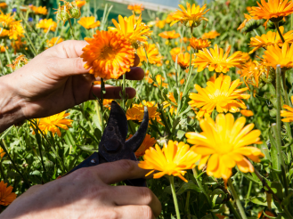 LandWorks Flower Garden. Photo Credit: Recourse Magazine